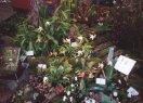 jhv2002_schaubepflanzung7.jpg