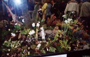 Terrarium der Schaubepflanzung