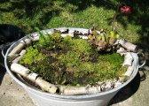 Moor-Wanne mit Karnivoren und einer Orchidee