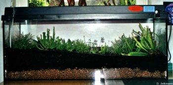 Das bepflanzte große Becken