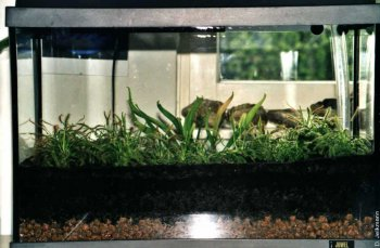 Das bepflanzte kleine Becken